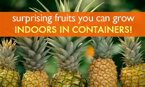Growing Dwarf Fruit Trees In Containers - 6 surprising fruits you can grow organically indoors in containers indoor fruit inhabitat
