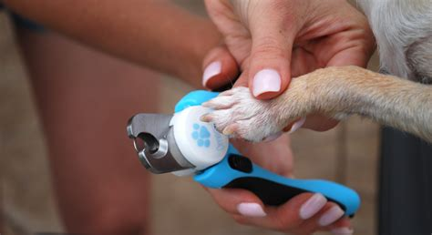 how to trim puppy nails how to cut your s nails without being afraid proud