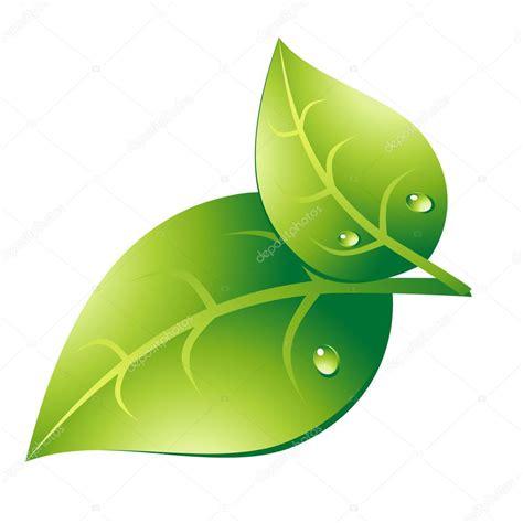 imagenes de hojas otoñales hoja verde par archivo im 225 genes vectoriales