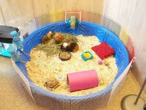 Guinea Pig Hutch Size Make Your Own Guinea Pig Cage Abyssinian Guinea Pig Tips