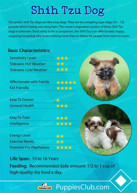 shih tzu breed characteristics breeds and their characteristics breeds picture