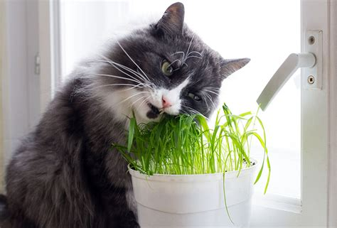 indoor plants for cats best houseplants for cats to eat numberedtype