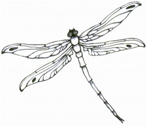 dragonfly tattoo designs the body is a canvas