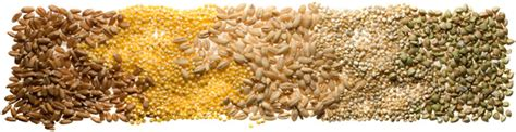 whole grains meaning in telugu whole grains 101 chowhound