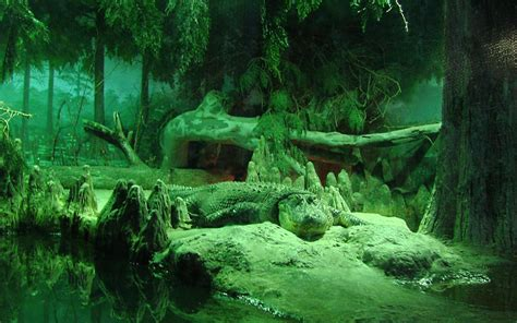 wallpaper krokodil crocodile hd wallpaper and background image
