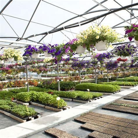 vivai piante da giardino foto vivaio piante da orto e giardino di sabina