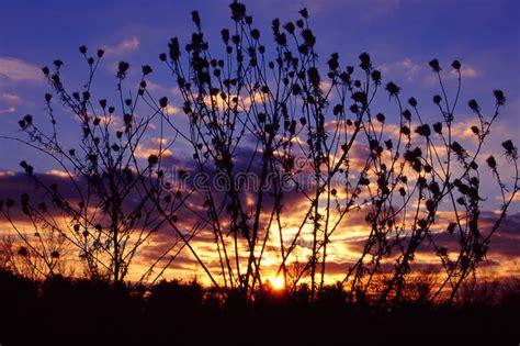 illinois prairie sunset prairie sunset landscape illinois stock photo image