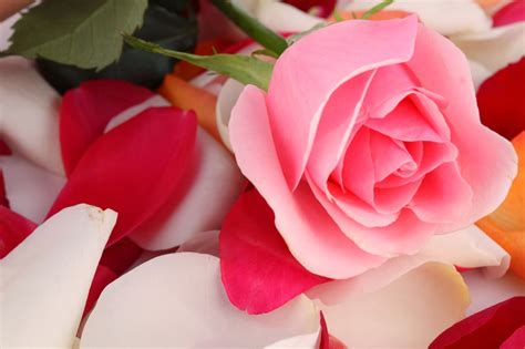 gambar gambar bunga cantik  indah terbaru  gambar