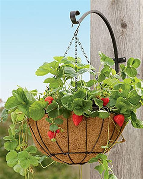 buy a planter strawberry success kit hanging planter buy from gardener