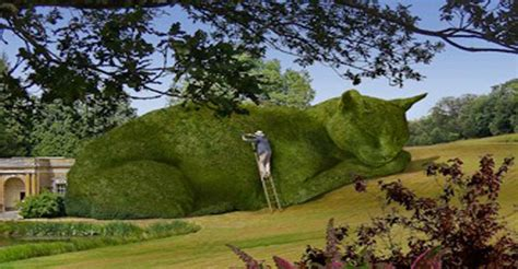topiary cat topiary cats that are out of this world we cats and