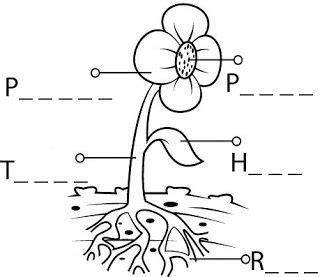 actividades de ciencias para primer grado las plantas para los ni 241 os de 4 186 de primaria actividad 1