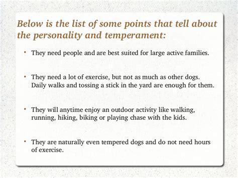 golden retriever temperament and behavior chion goldens personality and temperament of golden retrievers