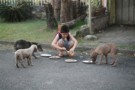 fauna urbana villa mar 237 a un perro se subi 243 a un colectivo fauna urbana villa mar 237 a este ni 241 o de 9 a 241 os creo una