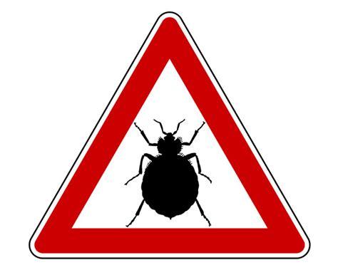 insetti da letto cimici da letto come debellarle