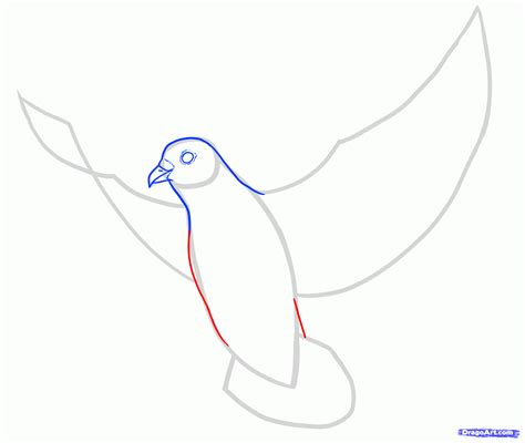 Outline Five Areas Of Asas Reform by How To Draw Doves Step By Step Birds Animals Free Drawing Tutorial Added By