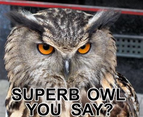 Superb Owl Meme - page 3