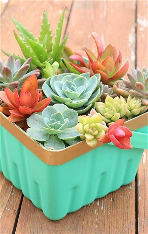 diy succulents diy succulent projects 60 ways to display succulents in