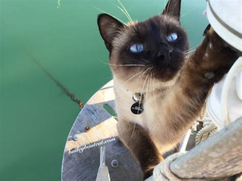 living on a boat with cat living aboard bailey boat cat