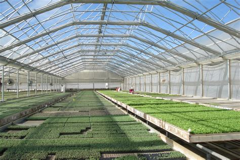 greenhouse design commercial greenhouse continental natural ventilation