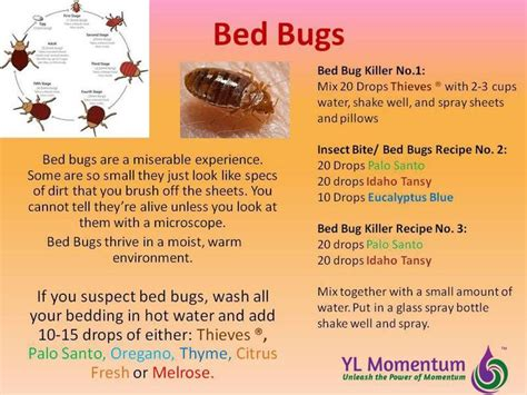 essential oils for bed bug bites top 17 idei despre bed bugs signs pe pinterest camere de