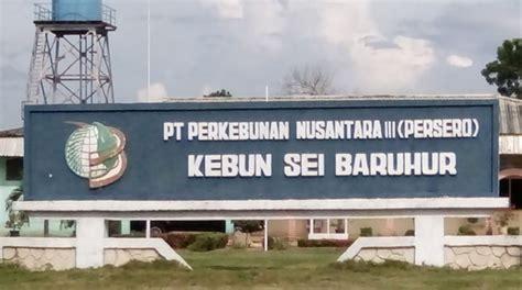 Minyak Nilam Di Sumatera Utara pt perkebunan nusantara iii garap pabrik minyak goreng