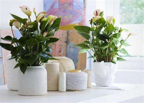 hm plant big floor vase интересни идеи за цветята вкъщи rozali