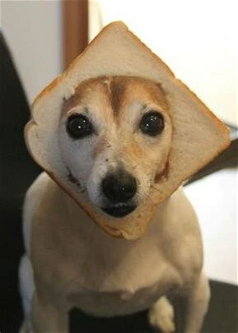 inbred dogs dogs on