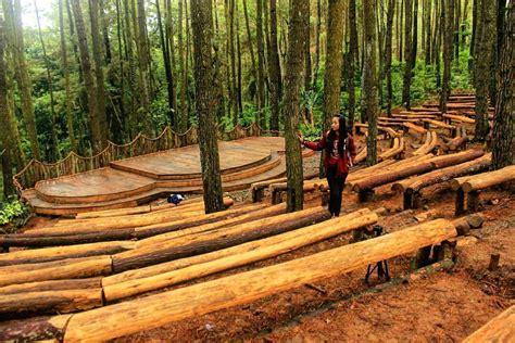 hutan pinus  memiliki panggung  mendunia lho