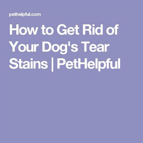 how to get rid of tear stains on dogs 1000 ideas about tear stains on care puppy care and puppy treats