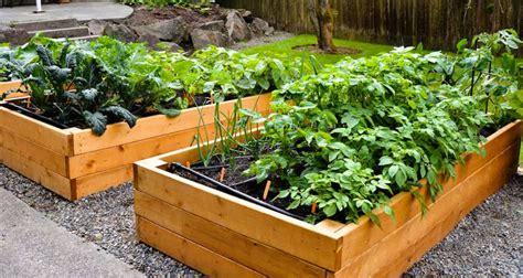cara membuat zpt untuk tanaman cara membuat baja npk larut untuk tanaman organik di rumah