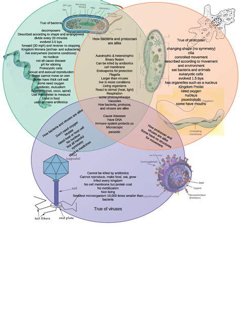 venn diagram of virus and bacteria worksheets bacteria and viruses worksheet opossumsoft