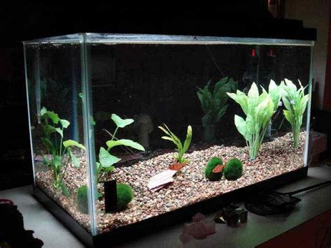 Decorating Ideas For Fish Tank Aquarium Decoration Ideas Android Apps On Play