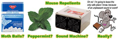 mouse can you remove the mouse yourself