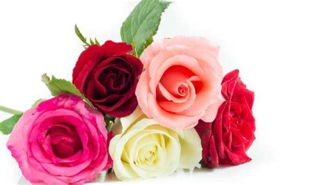 regalare fiori significato significato fiori e piante scopri i fiori adatti in ogni