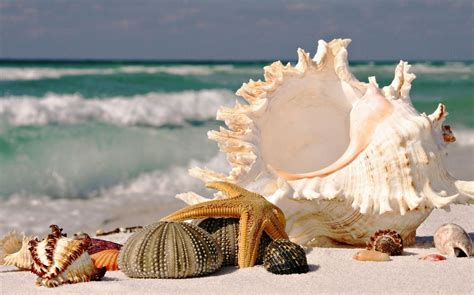 the top 7 amazing and exciting things to do in hong kong 7 interesting facts about seashells you should