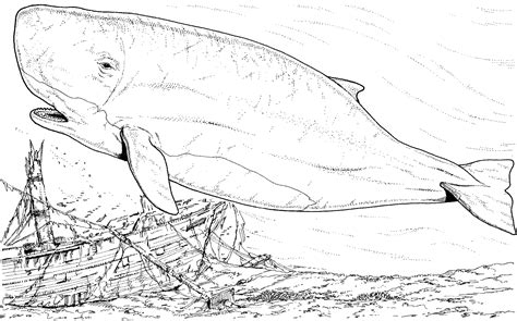 Free Coloring Pages Of The Whale Shark Whale Shark Coloring Page