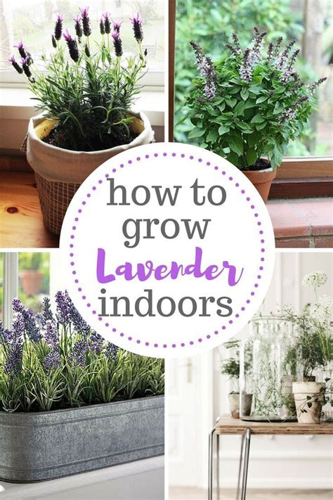 how to grow herbs indoors best 25 indoor herb planters ideas only on pinterest