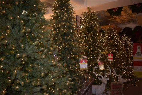 true value christmas lights make your christmas tree pop with these brilliant