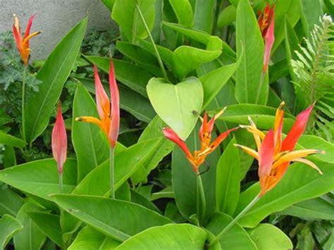 candele vaginali fotograf 237 as de paisajes flores plantas animales
