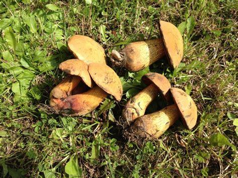 Weißer Pilz Im Garten Essbar by Sind Das Essbare Pilze Gem 252 Se Und Salat Forum Chefkoch De