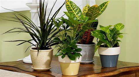 Magic Plant Can Tanaman Hidup Diy Plant tanaman hias pembersih udara dalam ruangan bibitbunga