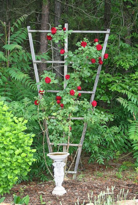 rose trellis plans rose trellis plans rose trellis plans tips on planting