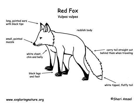 diagram of a jaguar animal diagram free engine image for