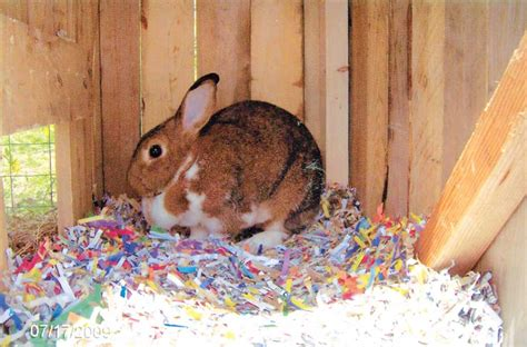 guinea pig bedding bulk anyone interested in 15 20 000 posters huge wholesale deal