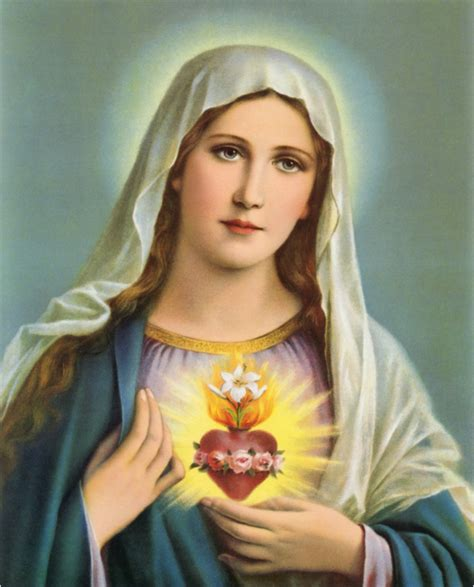 immaculate heart of mary the immaculate heart of mary immaculate heart of mary