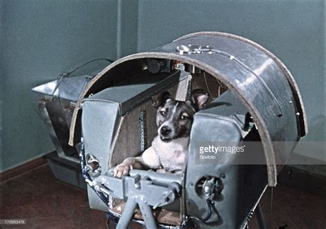 laika the in space best of news getty images