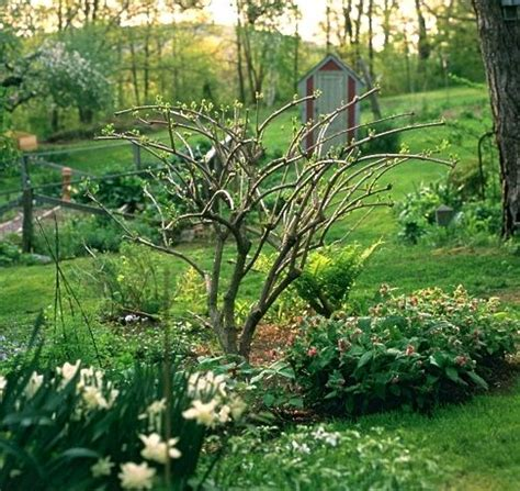 q a pruning hydrangea late planting and more a way to garden