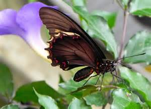 beautiful butterflies photo de jardin des papillons
