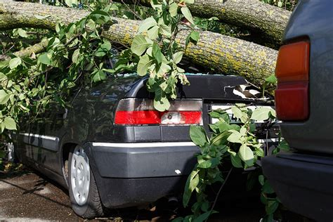 auto insurance when a tree what does comprehensive auto insurance cover prime auto insurance