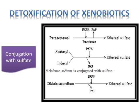 Benzene Detox by Degradation Of Xenobiotics